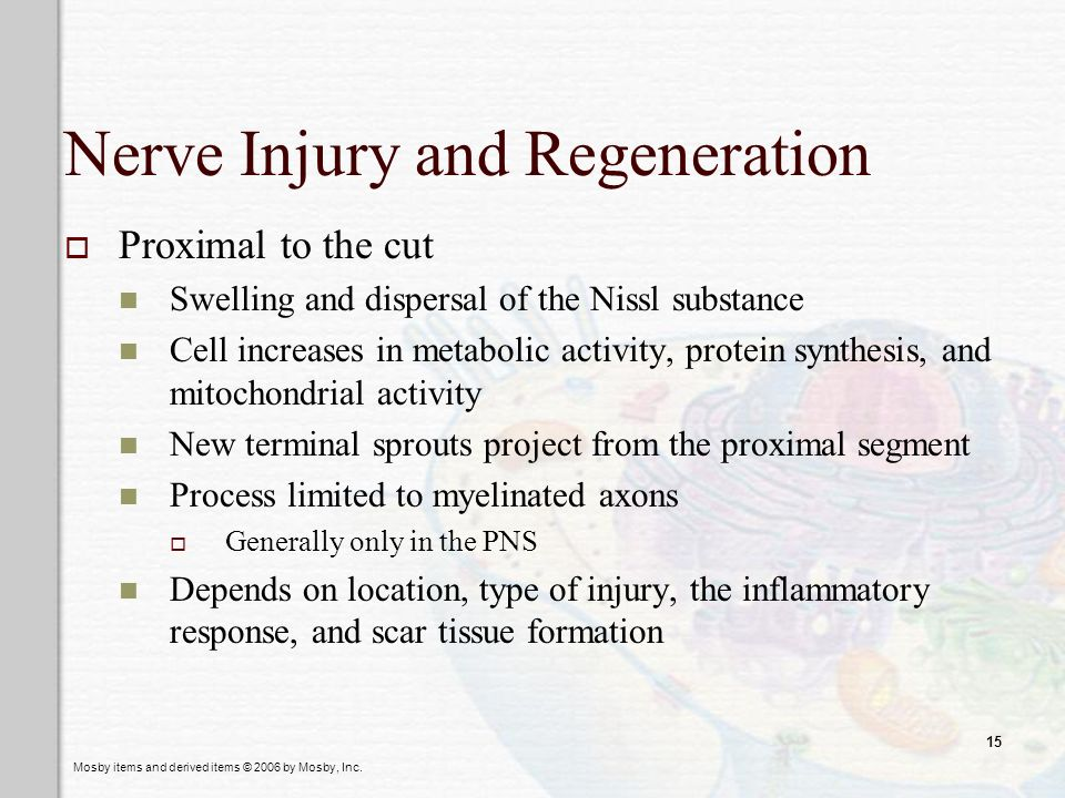 Nerve Injury and Regeneration