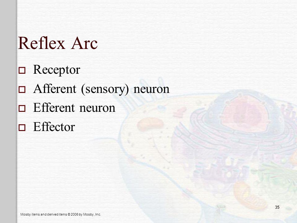 Reflex Arc Receptor Afferent (sensory) neuron Efferent neuron Effector