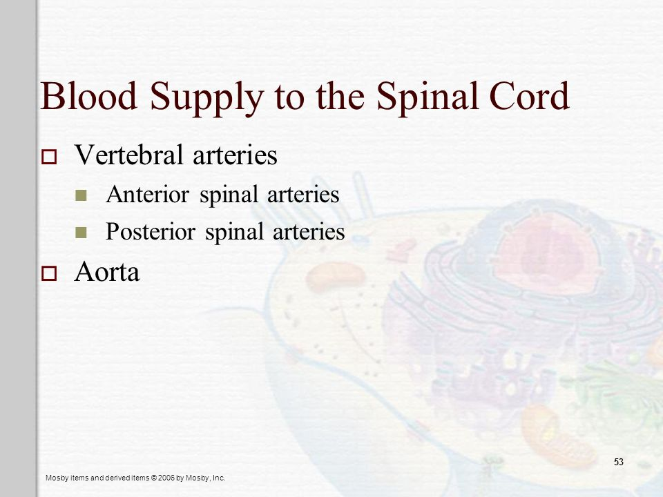 Blood Supply to the Spinal Cord