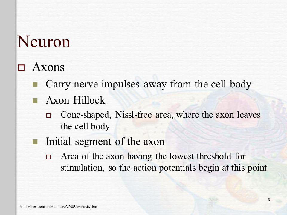 Neuron Axons Carry nerve impulses away from the cell body Axon Hillock