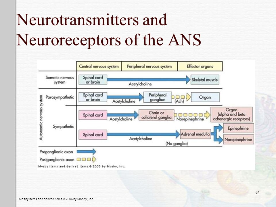 Neurotransmitters and Neuroreceptors of the ANS