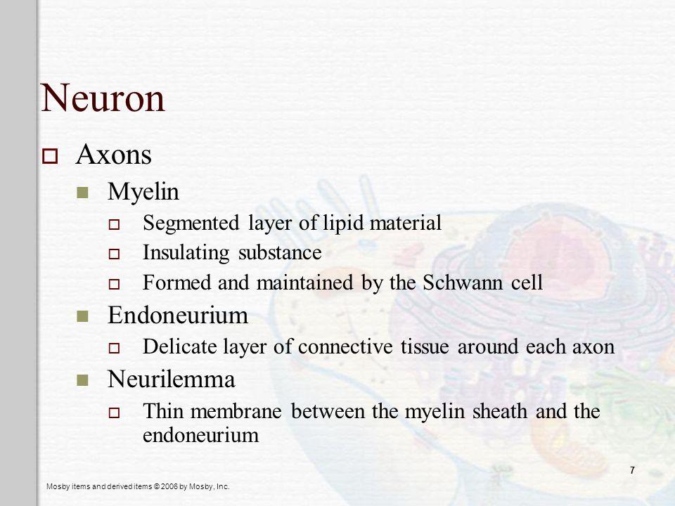 Neuron Axons Myelin Endoneurium Neurilemma