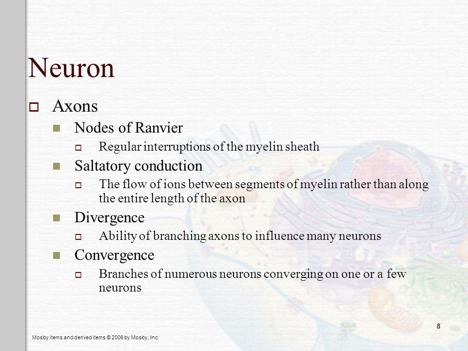 Neuron Axons Nodes of Ranvier Saltatory conduction Divergence