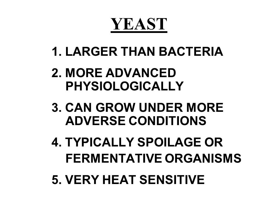YEAST 1. LARGER THAN BACTERIA 2. MORE ADVANCED PHYSIOLOGICALLY