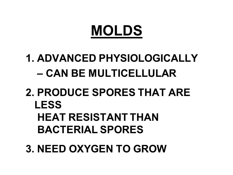 MOLDS 1. ADVANCED PHYSIOLOGICALLY – CAN BE MULTICELLULAR