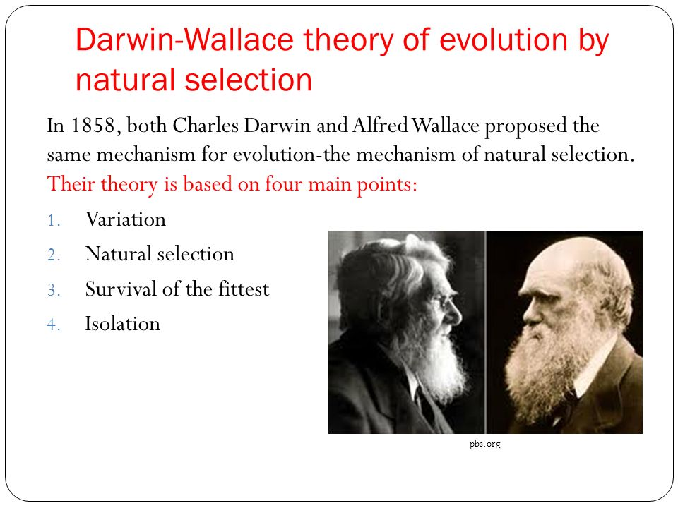 an examination of darwins theory of survival for the fittest It is the only nobel ever awarded for an anti-darwinian theory of biological origins introduction the key elements of neo-darwinism are creation of biological variety and natural selection of the more fit organisms survival of the fittest has been well documented difficulties that still remain include the problem of the arrival of.