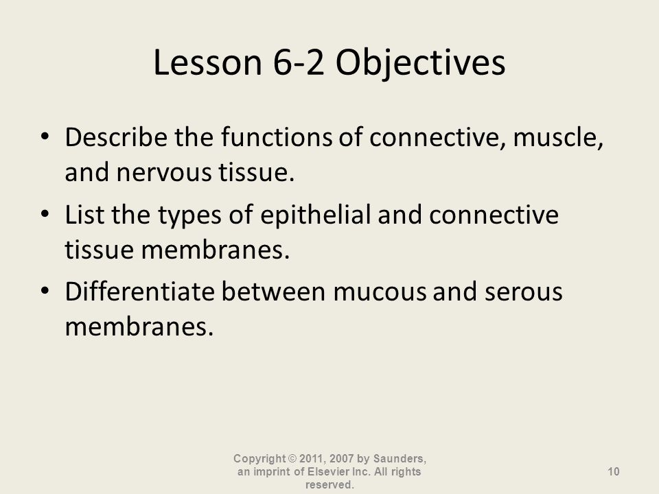 Lesson 6-2 Objectives Describe the functions of connective, muscle, and nervous tissue.