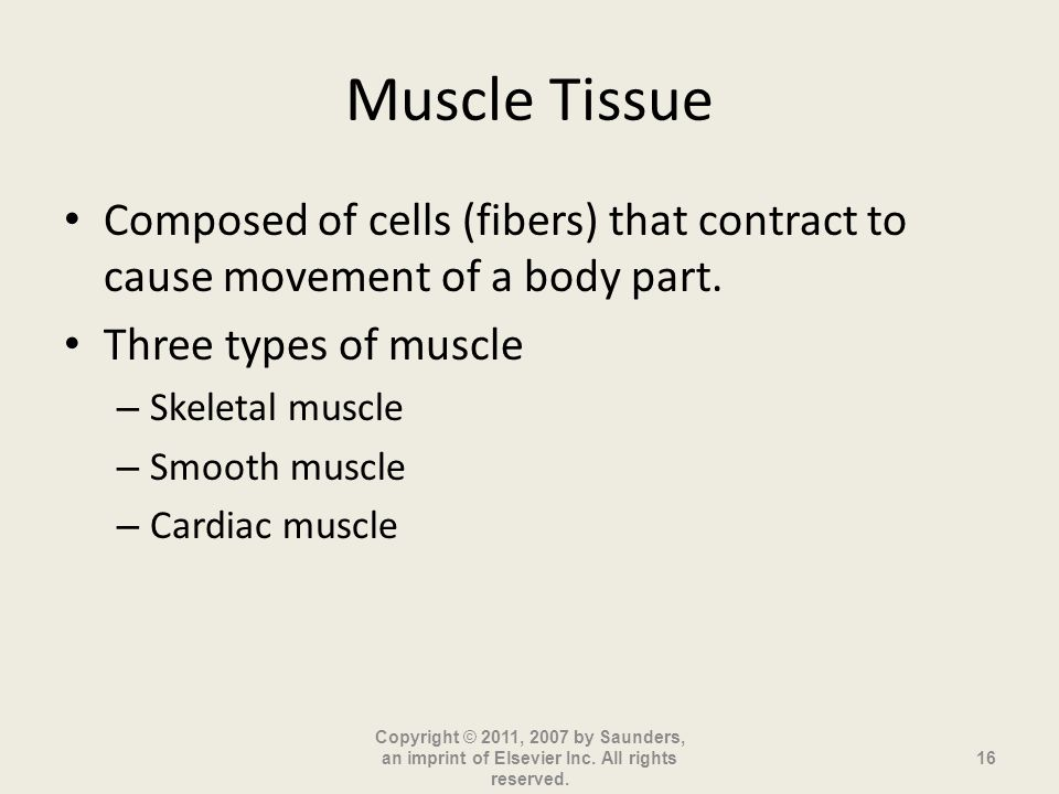 Muscle Tissue Composed of cells (fibers) that contract to cause movement of a body part. Three types of muscle.