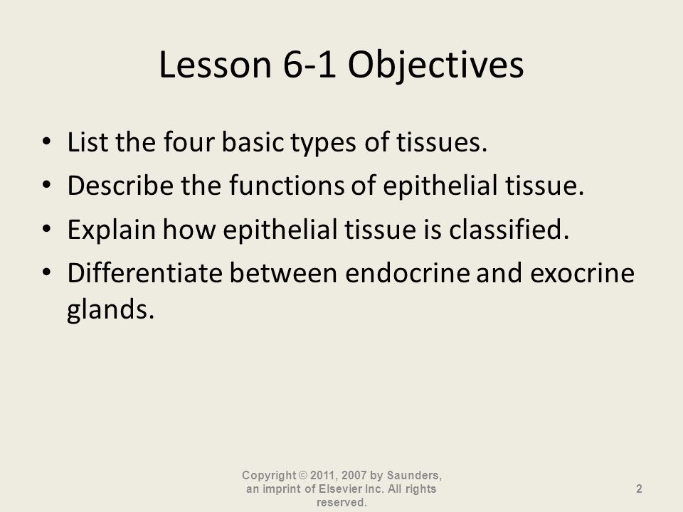 Lesson 6-1 Objectives List the four basic types of tissues.
