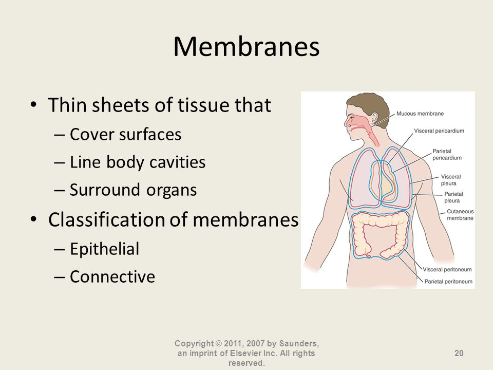 Membranes Thin sheets of tissue that Classification of membranes