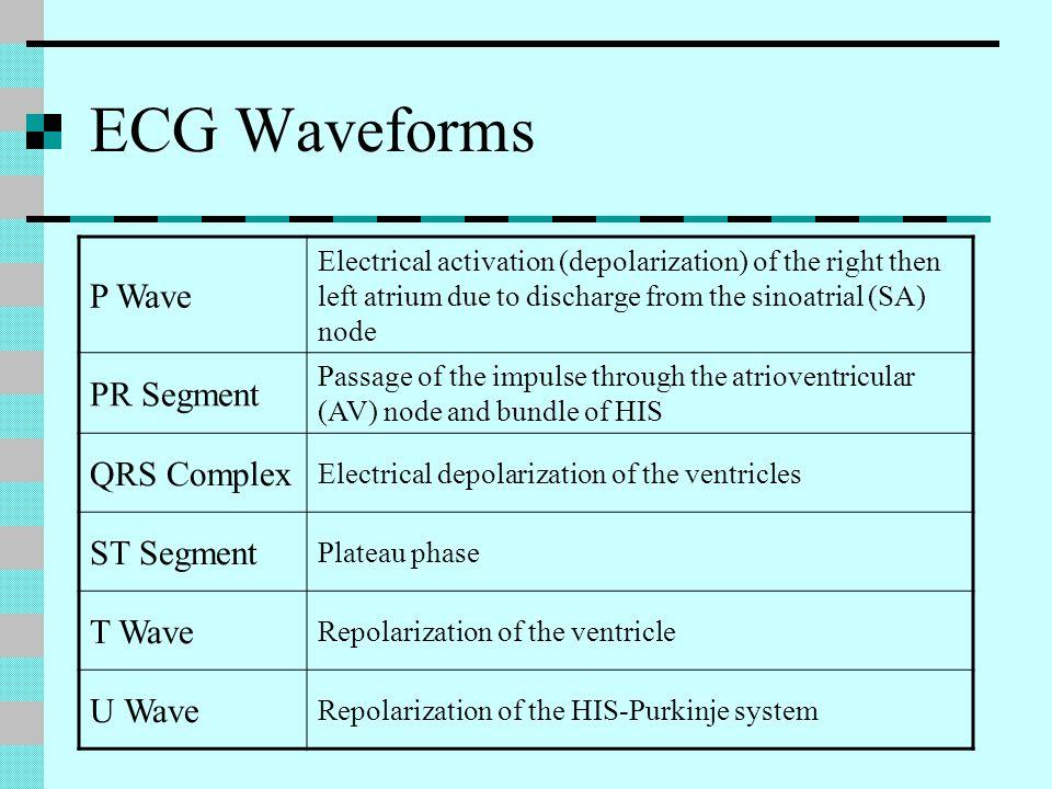 ECG Waveforms P Wave PR Segment QRS Complex ST Segment T Wave U Wave