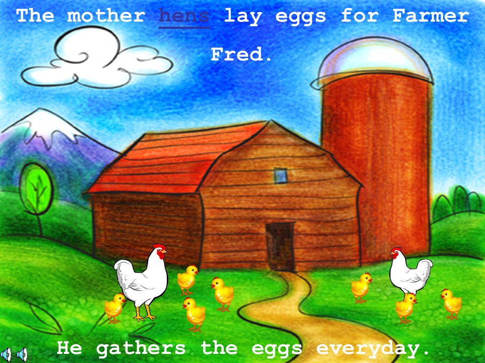 The mother hens lay eggs for Farmer He gathers the eggs everyday.