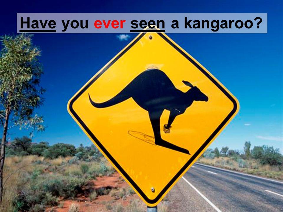Have you ever seen a kangaroo