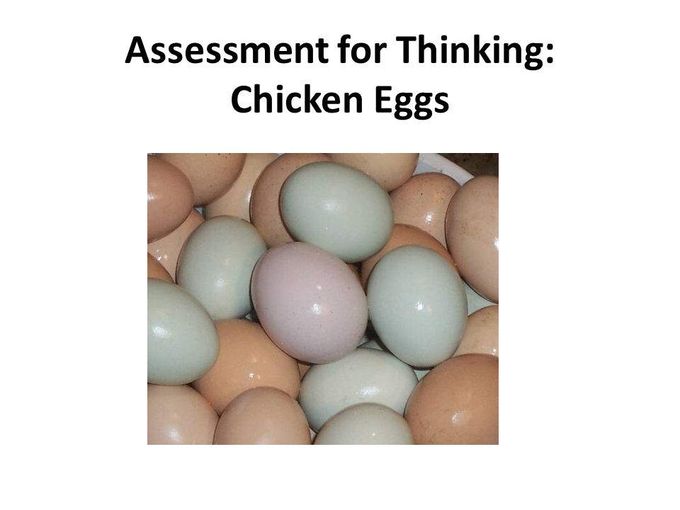 Assessment for Thinking: Chicken Eggs