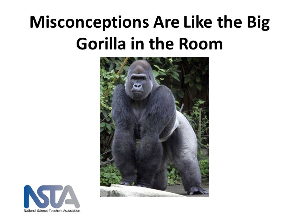 Misconceptions Are Like the Big Gorilla in the Room
