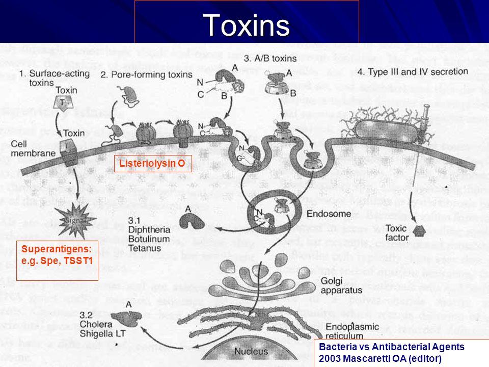 Toxins Listeriolysin O Superantigens: e.g. Spe, TSST1
