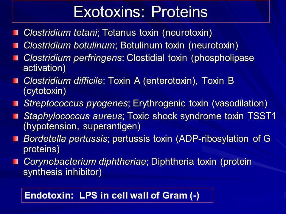 Exotoxins: Proteins Clostridium tetani; Tetanus toxin (neurotoxin)