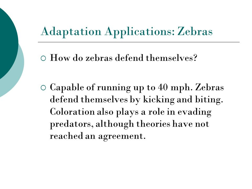 Adaptation Applications: Zebras