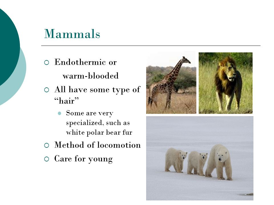 Mammals Endothermic or warm-blooded All have some type of hair