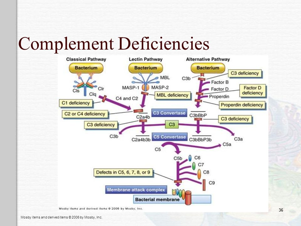 Complement Deficiencies