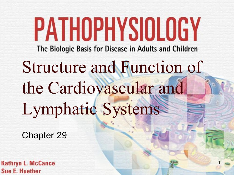 Structure and Function of the Cardiovascular and Lymphatic Systems