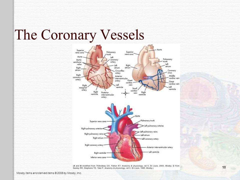 The Coronary Vessels