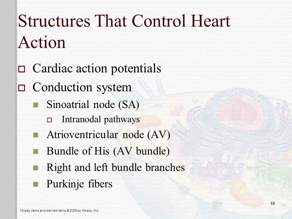 Structures That Control Heart Action