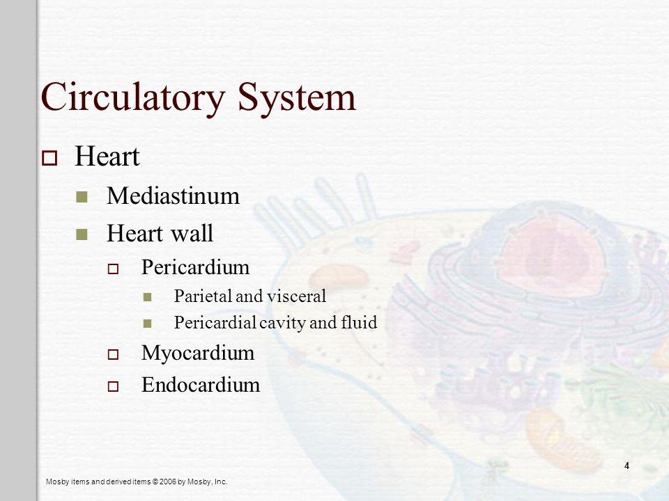 Circulatory System Heart Mediastinum Heart wall Pericardium Myocardium