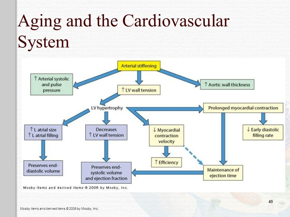 Aging and the Cardiovascular System