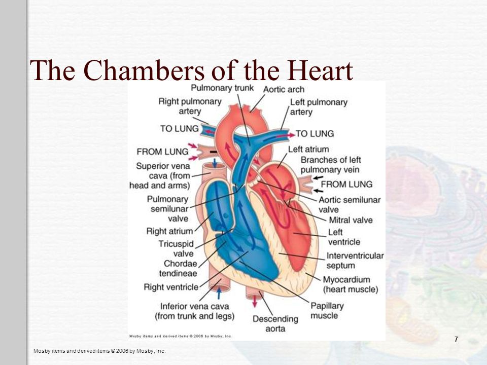 The Chambers of the Heart