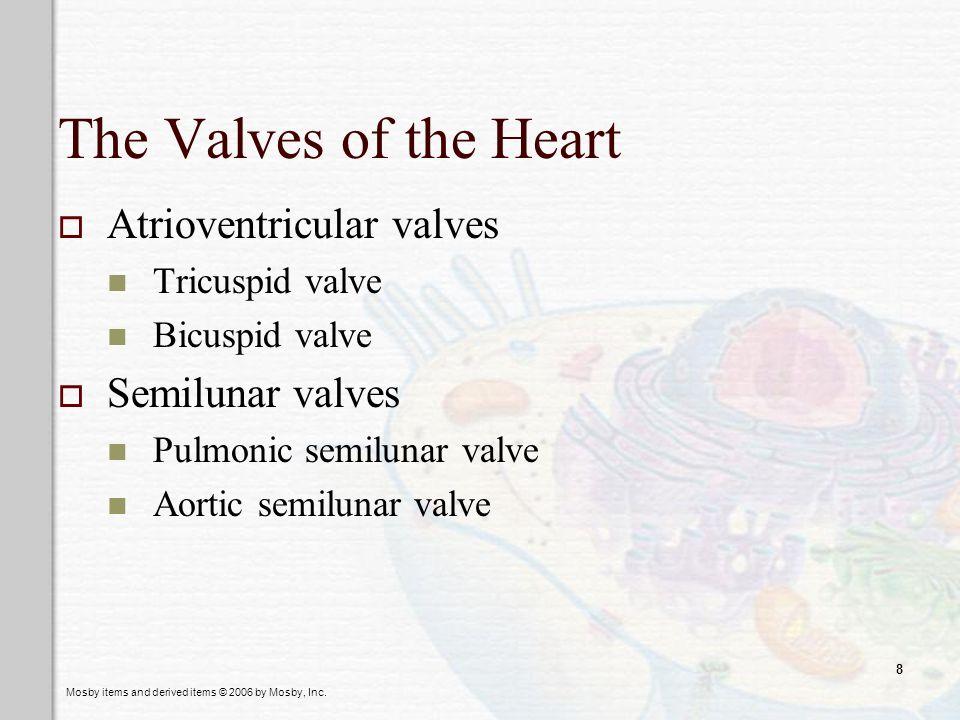 The Valves of the Heart Atrioventricular valves Semilunar valves