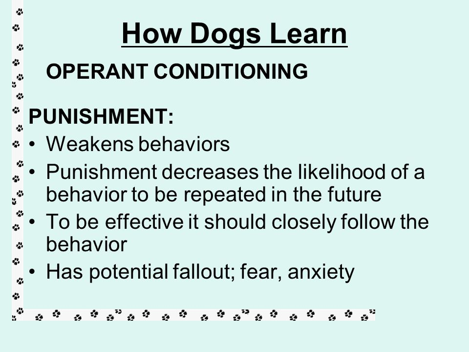 How dogs learn operant conditioning