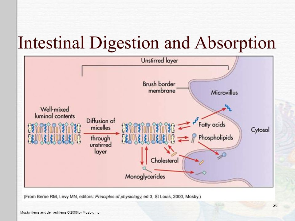 Intestinal Digestion and Absorption