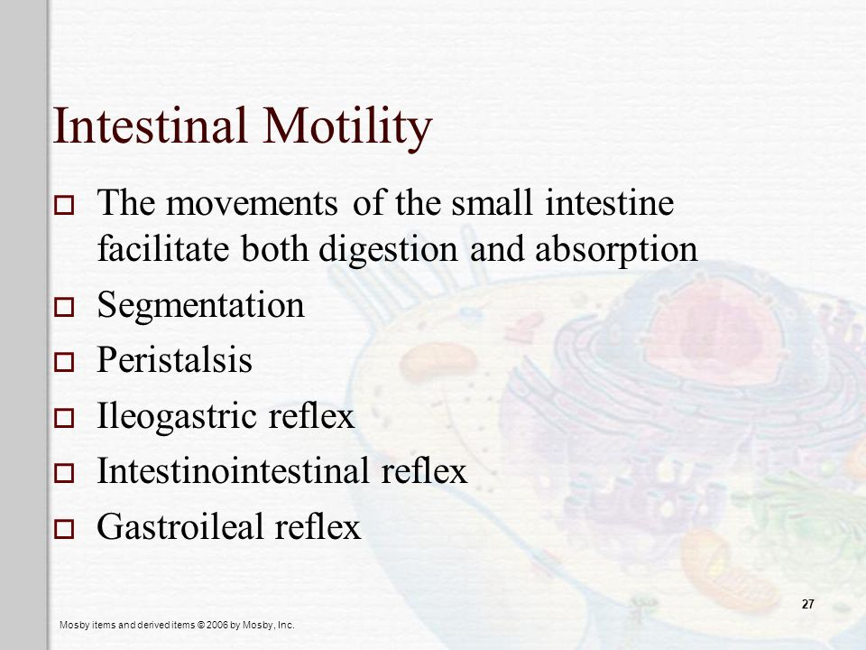 Intestinal Motility The movements of the small intestine facilitate both digestion and absorption. Segmentation.