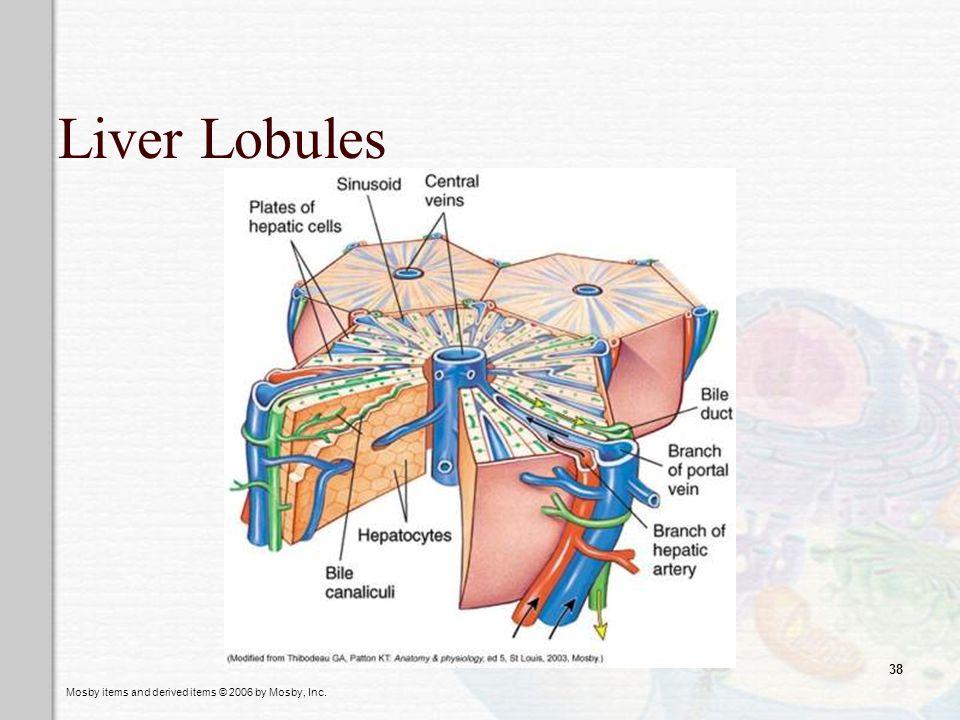 Liver Lobules