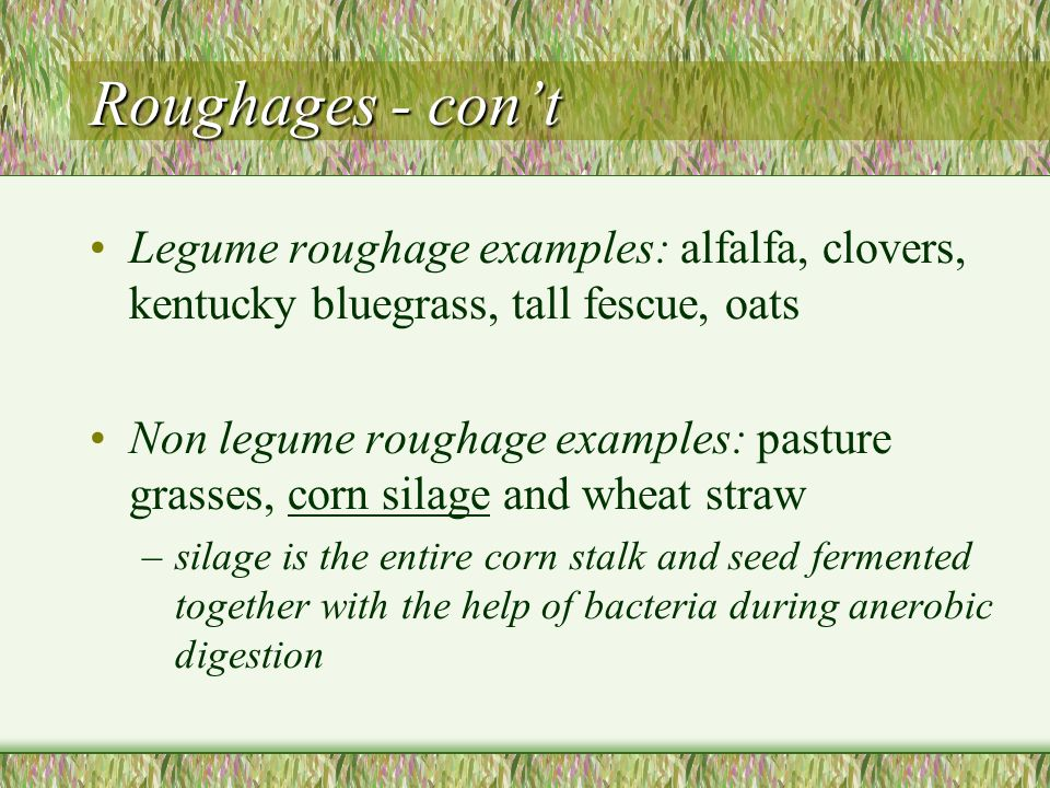 Roughages - con't Legume roughage examples: alfalfa, clovers, kentucky bluegrass, tall fescue, oats.