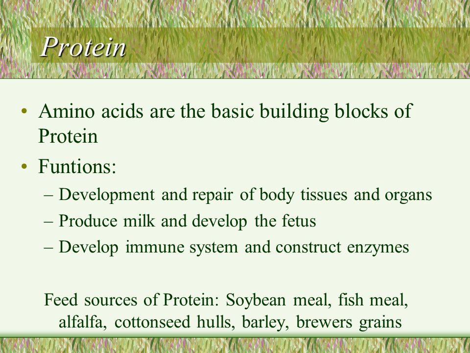 Protein Amino acids are the basic building blocks of Protein Funtions: