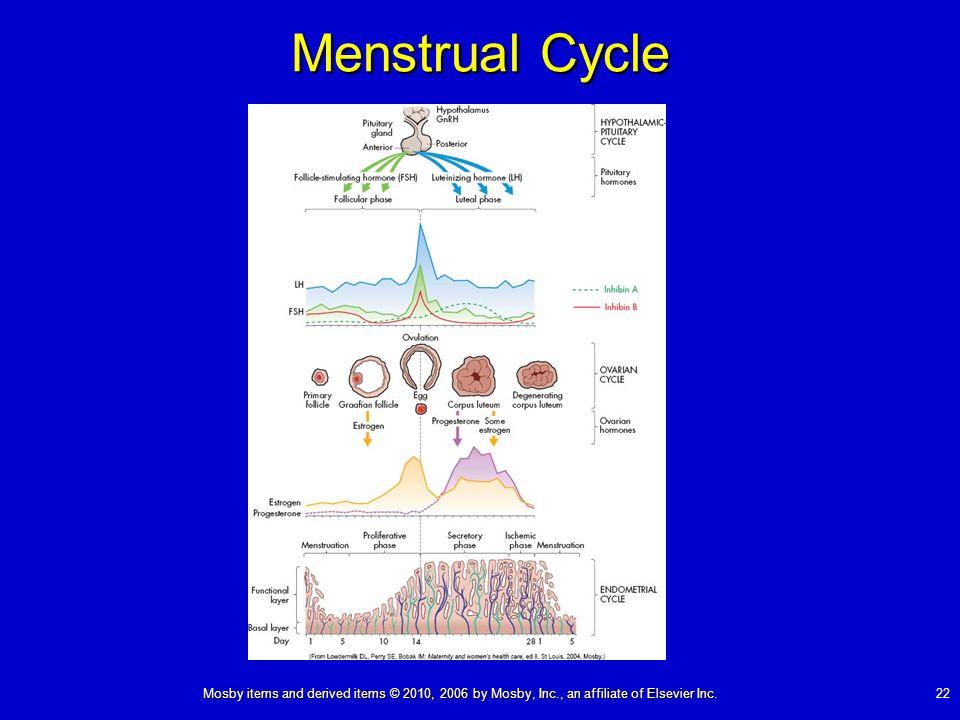 Menstrual Cycle sdfgsdfgsdfgsdfgsdfgdfgdfgsdfgsdfg