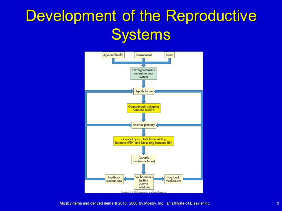 Development of the Reproductive Systems