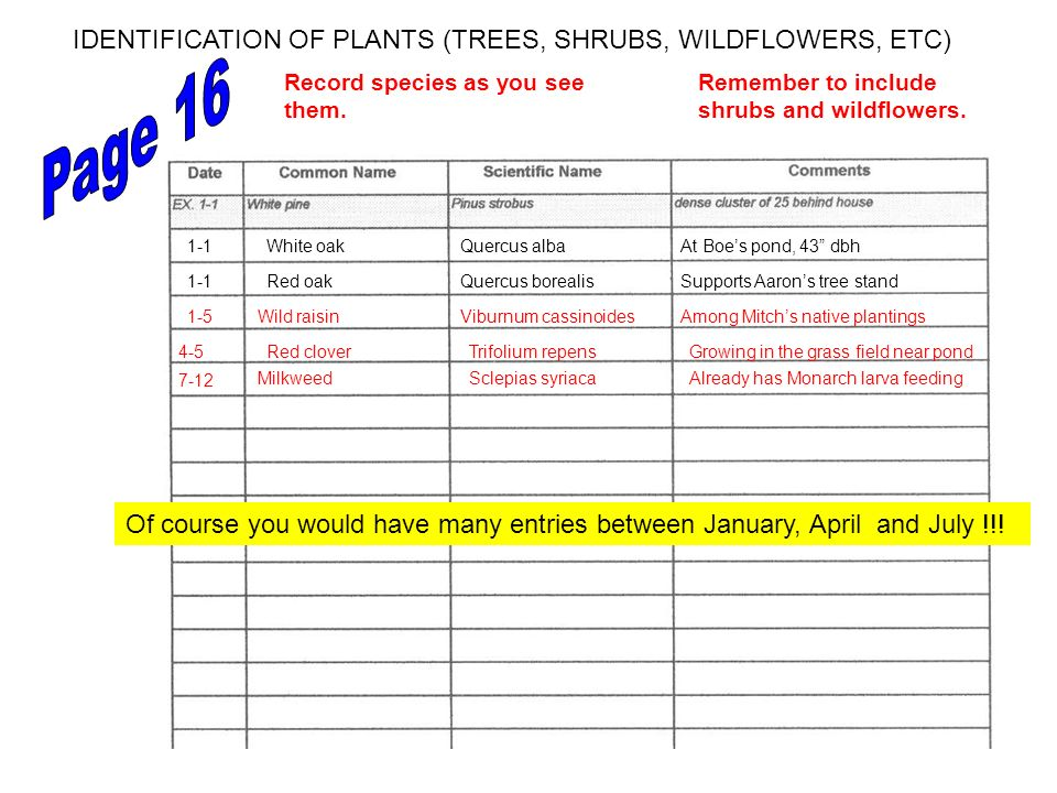 Page 16 IDENTIFICATION OF PLANTS (TREES, SHRUBS, WILDFLOWERS, ETC)