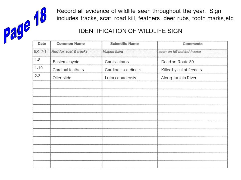 IDENTIFICATION OF WILDLIFE SIGN