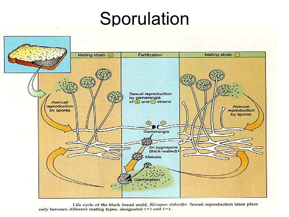 7547290 on Plant Spore