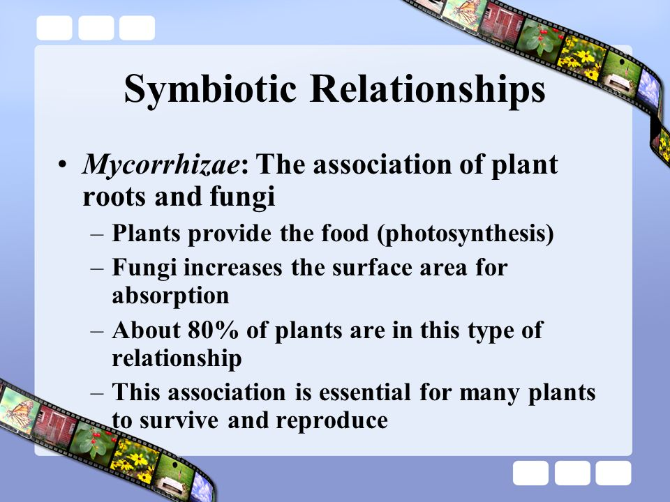 what is the unique nutritional relationship of mycorrhizae