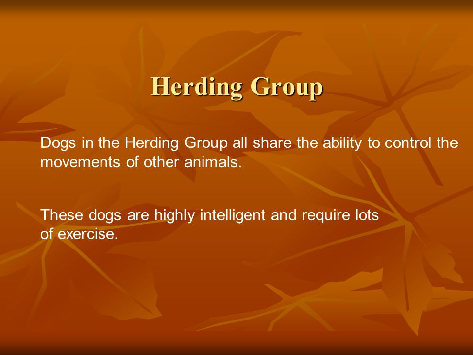 Herding Group Dogs in the Herding Group all share the ability to control the movements of other animals.