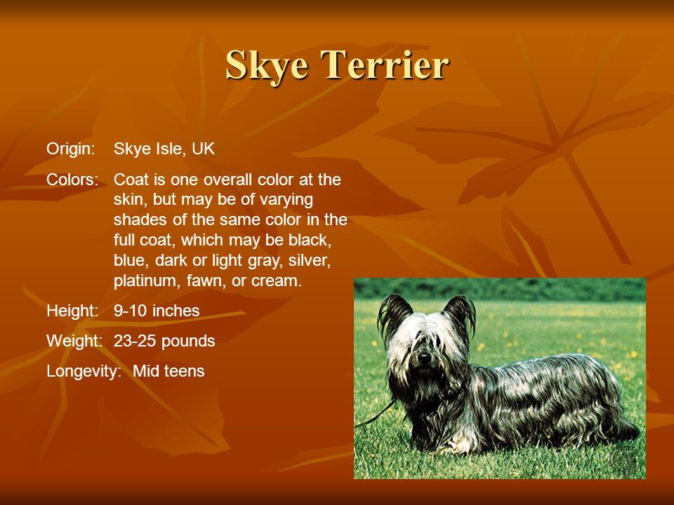 Skye Terrier Origin: Skye Isle, UK