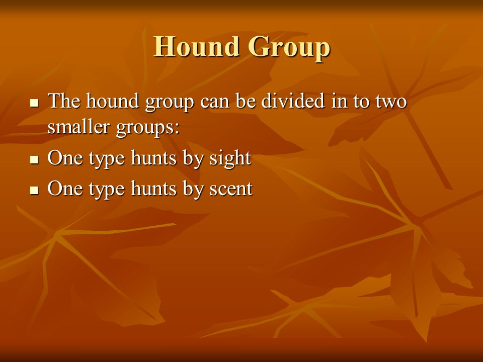 Hound Group The hound group can be divided in to two smaller groups: