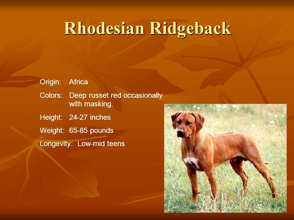 Rhodesian Ridgeback Origin: Africa