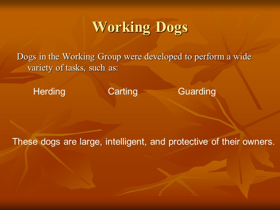 Working Dogs Dogs in the Working Group were developed to perform a wide variety of tasks, such as: Herding.