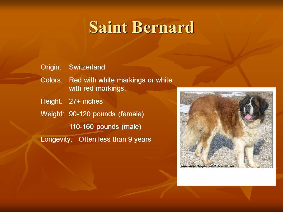 Saint Bernard Origin: Switzerland