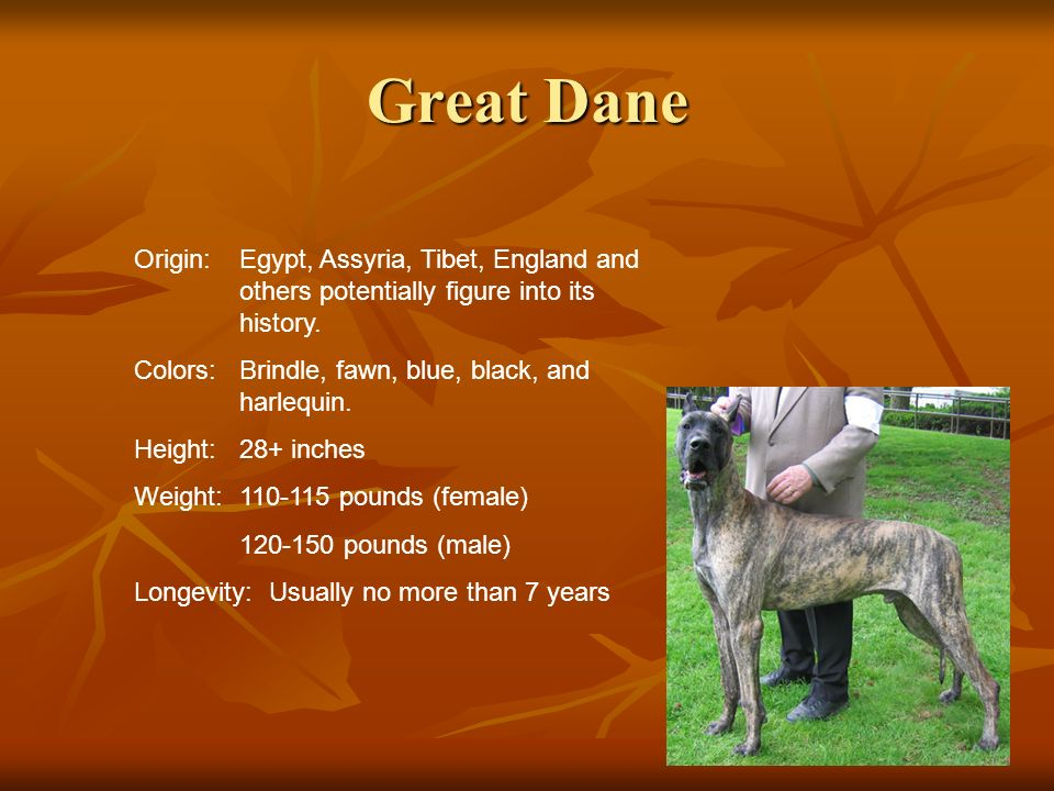 Great DaneOrigin: Egypt, Assyria, Tibet, England and others potentially figure into its history.